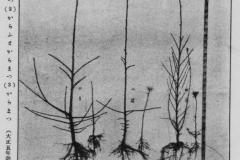그림9_함북지방-잎갈나무x1280